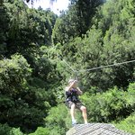 Start of the 230m Zip line from a 1000 year old Rimu