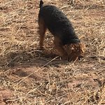 Dog digging for prairie dog