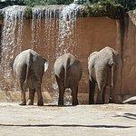 Photo de Lisbon Zoo