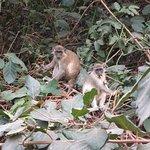 Photo of Abuko Nature Reserve