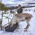 Photo of Tromso Lapland