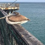 This bird is a regular fixture and isn't afraid of tourists ...he's pretty neat!