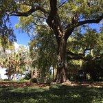Rip Van Winkle Gardens Foto