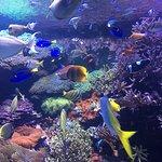Los colores de estos peces son un gran atractivo