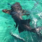 Nurse sharks - this was so cool!