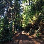 The shaded walk