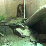 Photo de EcoWorld Picton Aquarium