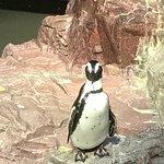 The Aquarium Greeters