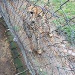 Moholoholo Wildlife Rehab Centre Foto