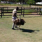 Photo of Cape Town Ostrich Ranch