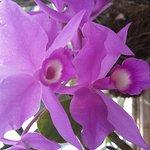Photo of Monteverde Orchid Garden