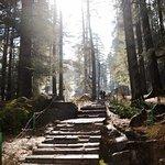 The path to Hidimba Temple