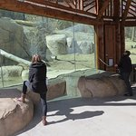 "Lion viewing with large ""glass windows"" and rocks to sit on."