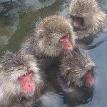 Onsen Monkeys