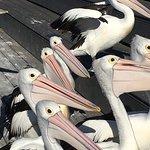 Photo de Pelican Feeding