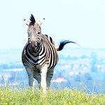 Foto de Lake Eland Game Reserve