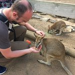 Featherdale Wildlife Park ops to feed the wallabies