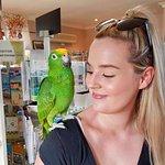 Maleny Botanic Gardens & Bird World