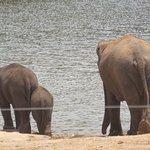 Happy elephants