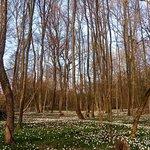 I mille occhi della primavera nel bosco di Cascina Armonia.