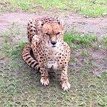 Photo of La Palmyre Zoo
