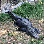 Foto de Madras Crocodile Bank