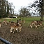 Whitworth hall deer park