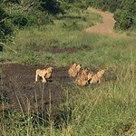 Photo of Tim Brown Tours - Durban Safari Tours