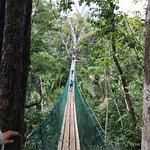 foot bridge to cross to zip line