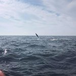 Flipping dolphins!