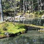 Pond in moss garden