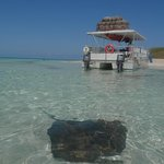 Boat is about 50 feet away - this is how clear the water is and the stingrays know its playtime