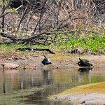 Photo de Harris Neck National Wildlife Refuge