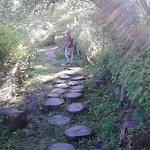 Neat stump trail!