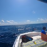 snorkeling/dive boat