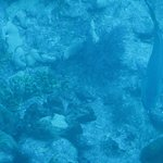 Saw a 3-4' Nurse shark from the Glass Bottom Boat