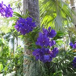 Gorgeous orchids, and gardens