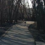 Three white-tailed deer on the paved bike trail near Big Woods Lake Rec area