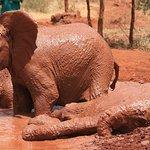Baby elephants wallowing at David Sheldrick