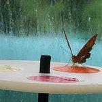 Photo de Coffs Harbour Butterfly House