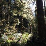 Foto de Rain Forest Nature Trail