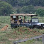 Watching the lion watching us from inside andBeyond Kichwa Tembo