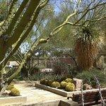 Garden Area 1