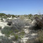 Typical landscape in desert (trails if you can find them)