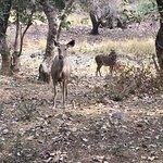 Photo of Vivanta by Taj - Sawai Madhopur Lodge