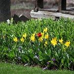 Spring at Albert 1er