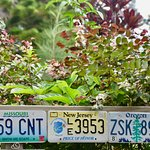 Look for License Plates from your home state.