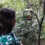 Photo de Narrows Escape Rainforest Retreat