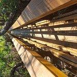 Myakka Canopy Walkway Foto