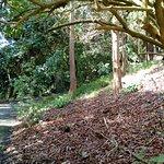 A quiet walk in the Botanical Garden